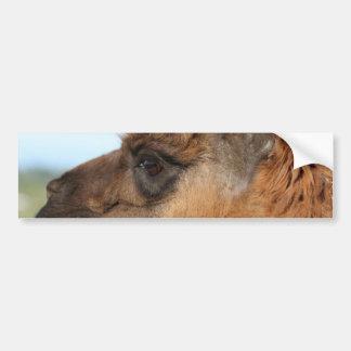 Llama looking left-Brown llama in a field Bumper Sticker