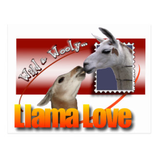 LLAMA LOVE - WILD AND WOOLEY! POSTCARD