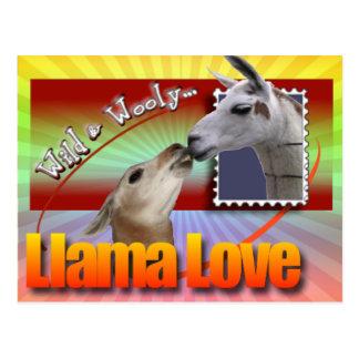 LLAMA LOVE - WILD AND WOOLY POSTCARD
