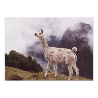 Llama Machu Picchu, Peru Card