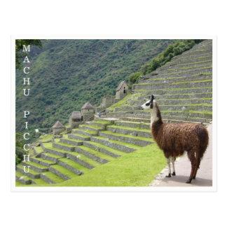 llama machu picchu postcard