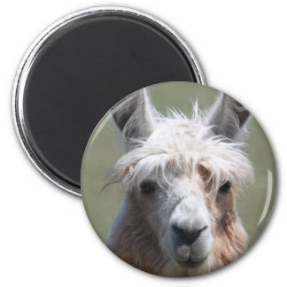 Llama Magnet