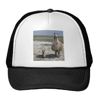 Llama mama with her newborn cria trucker hat