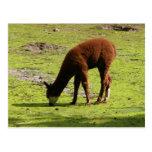 Llama marrón mullida que pasta tarjeta postal