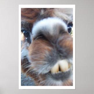 Llama Nerdy Póster