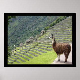 llama peruana posters
