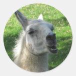 Llama Photograph Classic Round Sticker