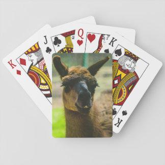 Llama Poker Deck