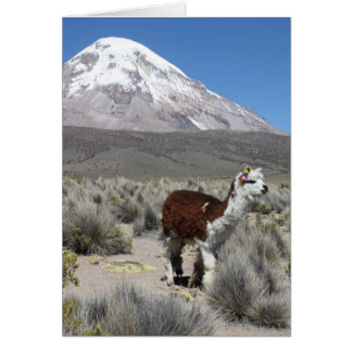Llama por la montaña de Sajama de la nieve, Tarjeta Pequeña