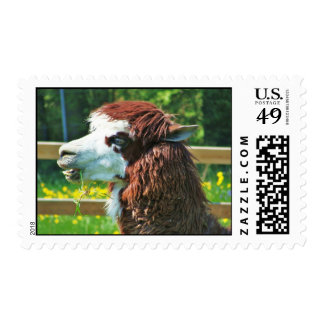Llama Portrait - Stamp