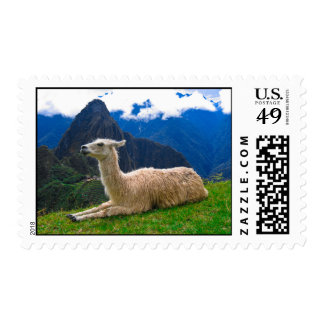 Llama Pose - Postage Stamp