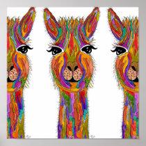 "Llama Poster - 12"" x 12"""