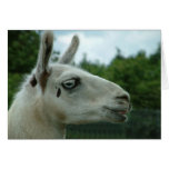 Llama Smiling Greeting Card