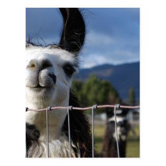 Llama sonriente divertida en Oregon meridional Postal