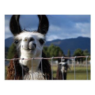 Llama sonriente divertida en Oregon meridional Tarjetas Postales