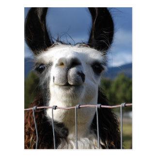 Llama sonriente divertida en Oregon meridional Tarjeta Postal