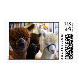 Llama Stamps
