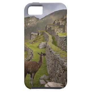 Llama stands on agricultural terraces with iPhone SE/5/5s case