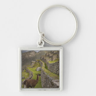 Llama stands on agricultural terraces with keychain
