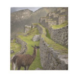 Llama stands on agricultural terraces with notepad