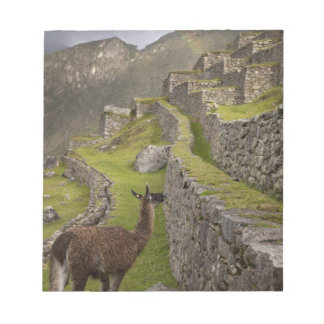 Llama stands on agricultural terraces with memo note pad
