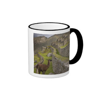 Llama stands on agricultural terraces with ringer coffee mug