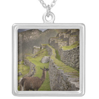 Llama stands on agricultural terraces with silver plated necklace