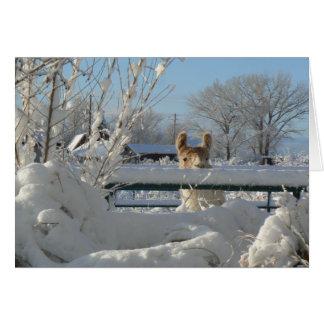 Llama, Starbuck In Winter Snow Greeting Card,