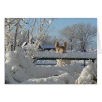 Llama, Starbuck In Winter Snow Greeting Card, Card