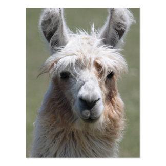 Llama Postales