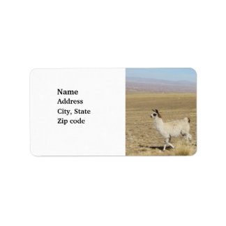 Llama - Two in Andes Mountains Address Label