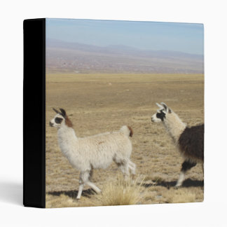 Llama - Two in Andes Mountains Binders
