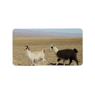 Llama - Two in Andes Mountains Personalized Address Labels