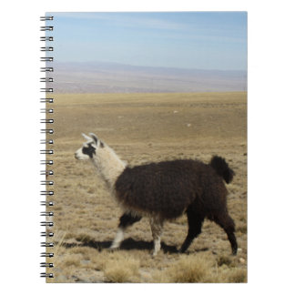 Llama - Two in Andes Mountains Spiral Note Books