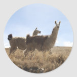 Llama - Two Llamas in Andes Mountain Plains Stickers