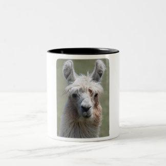 Llama!!! Two-Tone Coffee Mug