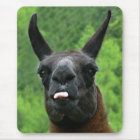 Llama with Attitude - Sticking out Tongue Photo Mouse Pad