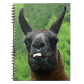 Llama with Attitude - Sticking out Tongue Photo Note Book