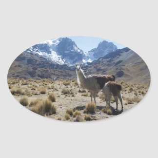 Llama with Nursing Baby Bolivia Mountains Oval Sticker