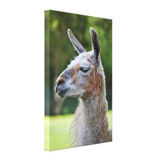 Llama Wrapped Canvas Print