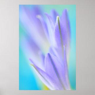 Llamaradas de la lila póster