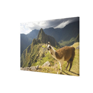 LLamas and an over look of Machu Picchu, Canvas Print