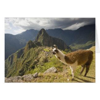 LLamas and an over look of Machu Picchu, Card