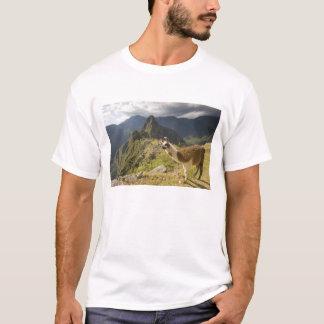 LLamas and an over look of Machu Picchu, T-Shirt