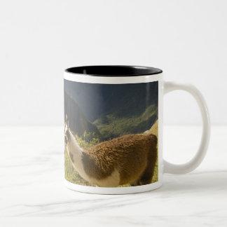LLamas and an over look of Machu Picchu, Two-Tone Coffee Mug
