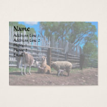 Llamas and Lambs Business Card