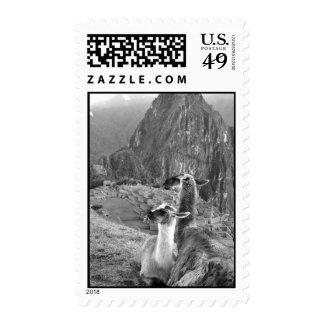 Llamas at Machu Picchu Stamp