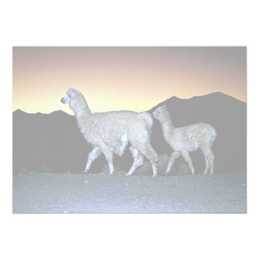 Llamas at sunset personalized invites