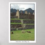 Llamas de Machu Picchu Perú Posters
