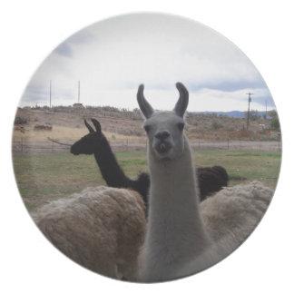 Llamas Dinner Plates